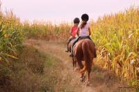 16 Septembre 2018 : Promenade chevaux 2h/ Promenade poney 1h30