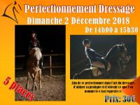 Perfectionnement dressage/ Travail en longe et longues rênes Dimanche 2 décembre.