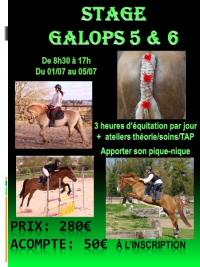 Stage Galop 5 & 6 au centre équestre de Maurecourt (78)